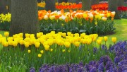 Flowers and Gardens HQ wallpapers Collection 1 41d101108223939