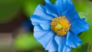 Flowers and Gardens HQ wallpapers Collection 1 59b3b1108224538