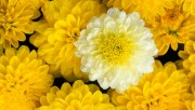 Flowers and Gardens HQ wallpapers Collection 1 7aefa7108222565