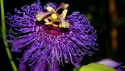 Flowers and Gardens HQ wallpapers Collection 1 Eab322108224562